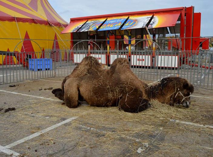 Le cirque Roncalli à Dreux, en octobre 2015