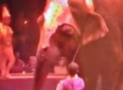 Éléphantes